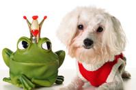 Prince charming pup