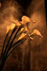 Bouquet of Calla Lillies