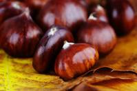 Ripe Wet Chestnuts