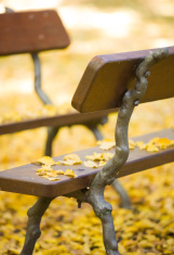 Two bench facing each other with yellow leaves