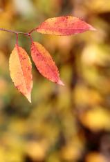 Multi-coloured leaf in the autumn