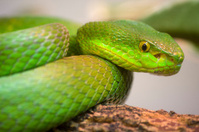 colorful scrunch green young snake