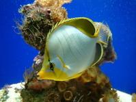 Monaco Fish