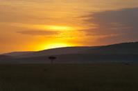Dawn at Masai Mara, Kenya