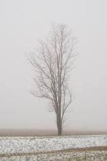 Bare Tree in Fog
