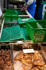 prepairing fish