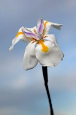 Wild flower with sky