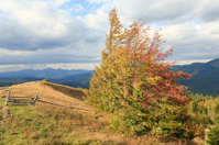 Autumn Carpathian mountainside.