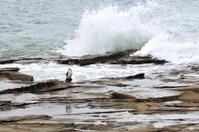 Bird standing among big waves