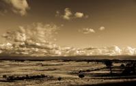 Farm paddock pasture grass landscape