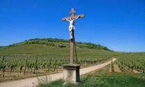 Cross in a vineyard