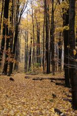 Yellow Autumn Path