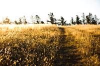 Farm country road paddock Australia