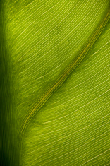 leaf underside 1