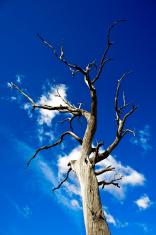 Tree dead eerie blue sky