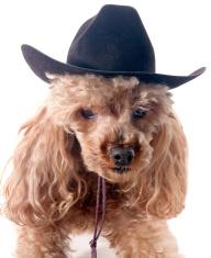 Dog in Western Hat
