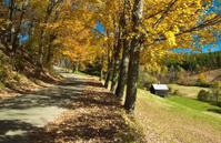 Down an Autumn Road