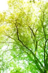 Sunbeam coming through tree branches