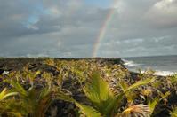 Beach with Rainbow