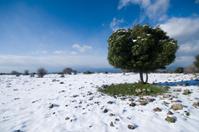 snowy golan height ,Israel