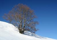 Lonely tree 2
