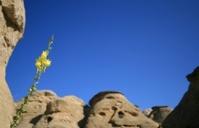Yellow Flower in Badlands