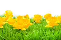 Yellow flowers on grass