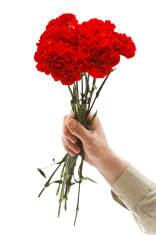 Man hand holding red carnation flower