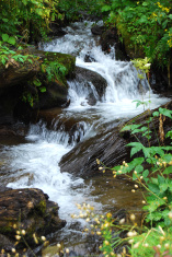 Forest spring cascade
