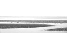 black and white dublin bay