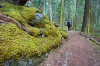 Rainforest Along Berg Lake Trail