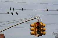 Birds & Traffic Lights