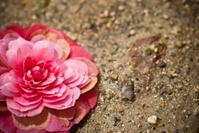 camellia fall