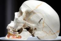 skull, side on