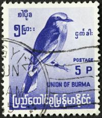 Burmese bird