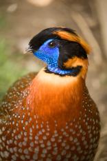 Tropical Bird Portrait
