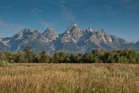 Grassy Meadow and Teton Range