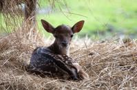 Kid Deer