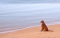 Lone dog on Beach