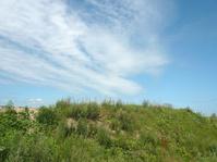 landscape at summer