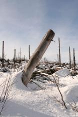 Black Forest Winter 01