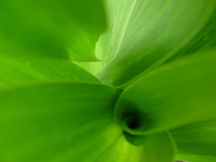 Shape of Nature - Beauty with Sunbeam