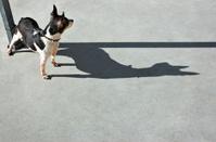 Dog Watching Dog