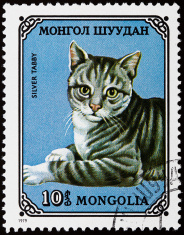 Cats stamp
