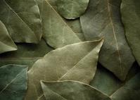 Dried laurel leaf horizontal background.