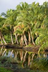 Suriname, plantation.