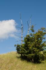 Dead Tree Dune