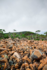 Lichen covered stones Mt Wellington Hobart Tasmania