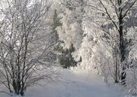 frost hoar