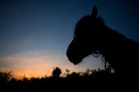 Horse silouhette in the sunset